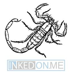 Scorpion 04
