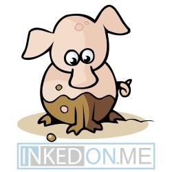 Baby Pig Sitting In Mud