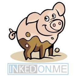 Baby Pig Standing In Mud